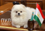 Пресс-служба президента Лукашенко опубликовала фотографию, из которой следует, что на международные встречи глава Белоруссии ездит не только с младшим сыном Колей, но и с любимой собакой
