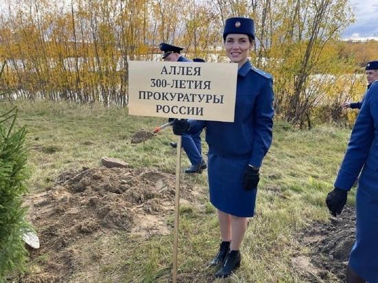 Прокуроры посадили еловую аллею на Ямале