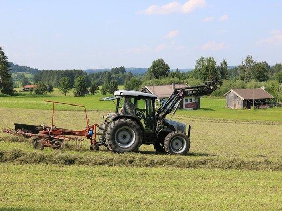 Житель Новосибирской области угнал трактор, чтобы накормить коров