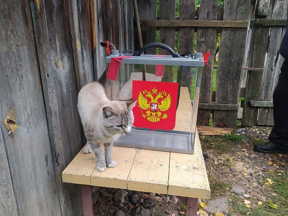 Голосуют все: фоторепортаж с избирательных участков в Рязанской области