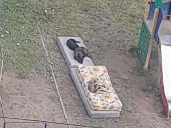 Жители ГРЭСа в Чите рассказали о стаях собак на детской площадке