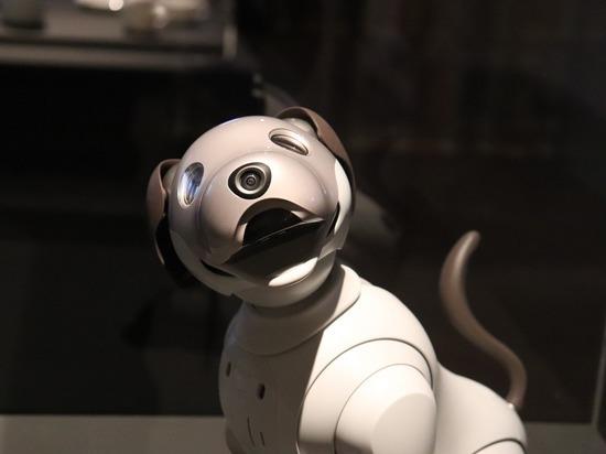 Автозавод в Южной Корее будет охранять робот-пес
