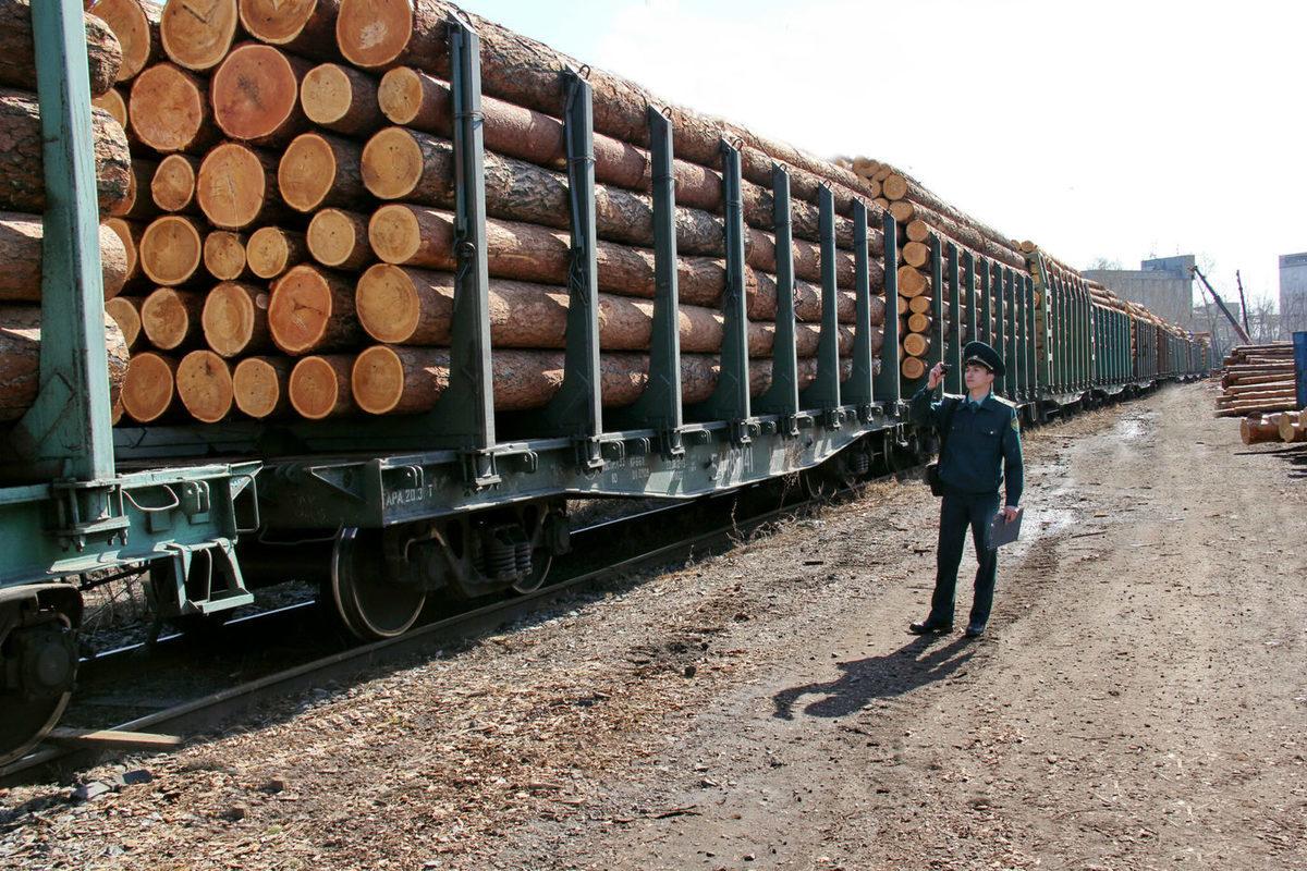 В Костромской области отменен карантин по экспорту леса