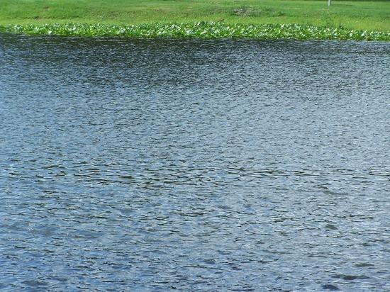 Река Борзя в Забайкалье может выйти на пойму у одноименного города