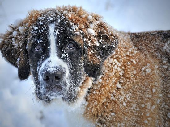 Грядущей ночью  в Кузбассе ожидается мокрый снег