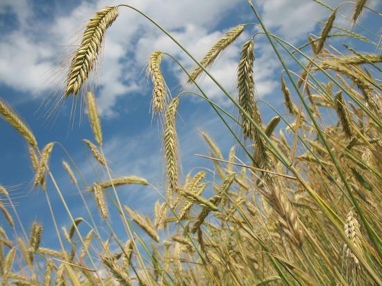 Запасы зерна в Госрезерве Украины дошли до критически низкого уровня