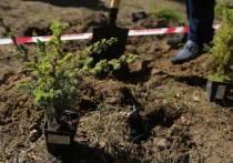 В Абакане за осень появится 3577 новых деревьев и кустарников