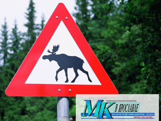 Выбежавший на дорогу лось стал причиной ДТП со смертельным исходом