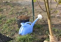 Успех посадки деревьев зависит от погоды, почвы и состояния саженца