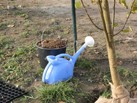 О чем нужно знать садоводам