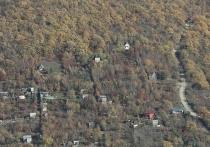 Во всех муниципалитетах Кубани подготовят варианты создания лесопарковых поясов