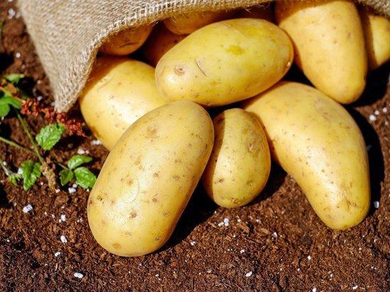 Украина стала главным поставщиком картофеля для Белоруссии
