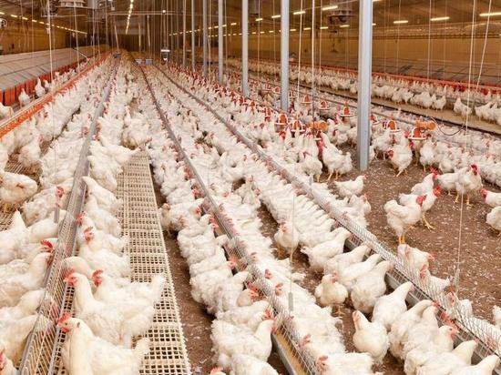 В Ярославской области еще одну птицефабрику наказали за загрязнение природы