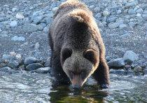 У Байкальского тракта замечены медведи