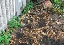 Правоохранители раскрыли дело, связанное с исчезновением 57-летнего жителя поселка Волоконовка Белгородской области, которого не видели с начала августа 2021 года