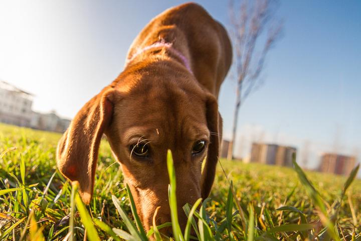 Кинологи рассказали в каких случаях собака сама найдет дорогу домой