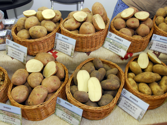 Экономист Николай Фрумкин предупредил россиян о подорожании картофеля