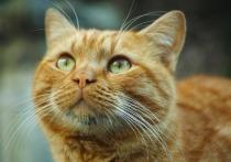 150 тысяч рублей штрафа получил машинист столичного метрополитена, который выбросил своего кота из окна на глазах двоих детей
