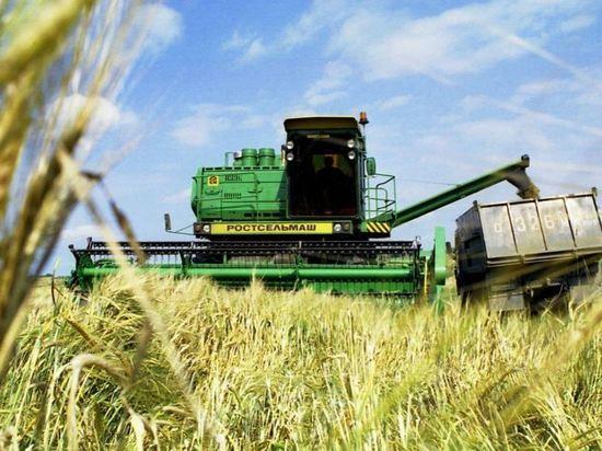 Минсельхоз заявил об отсутствии дефицита твердой пшеницы в России