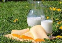 Согласно новому исследованию, у людей с более высоким потреблением молочных жиров риск сердечно-сосудистых заболеваний ниже, чем у людей с низким потреблением