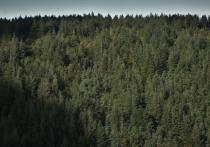 На заседании Правительства края подвели предварительные итоги федерального проекта «Сохранение лесов»