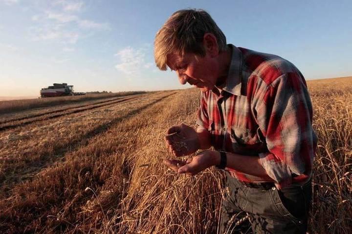 Тяжелый год: костромские аграрии насчитали 357 млн. убытков