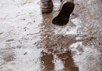 Дожди обещают синоптики в Пскове 24 сентября