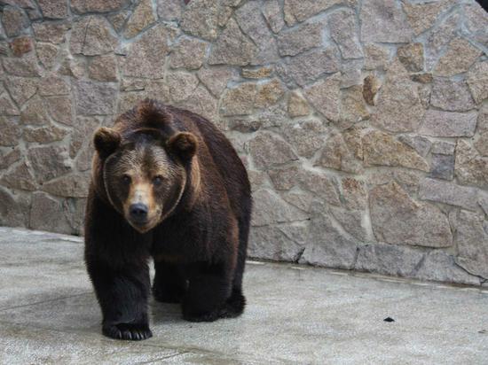 В челябинском зоопарке от отравления погибли два медведя