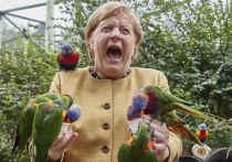 Ангелу Меркель атаковал агрессивный попугай
