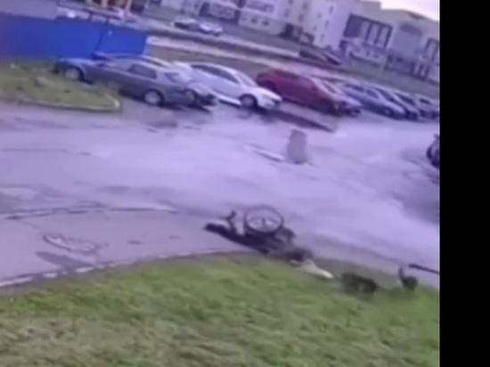 В Ульяновске инвалид-колясочник отбился от нападения бродячих собак