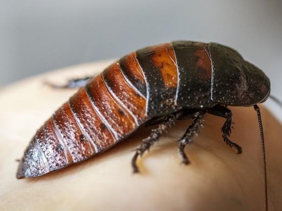 Москвичи обнаружили огромных тараканов в подъезде дома