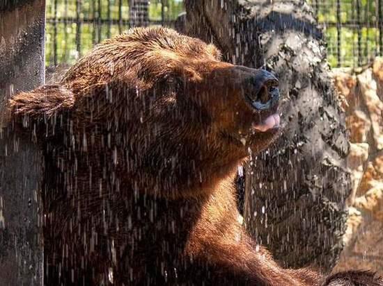 У ветеринаров вызвало опасение состояние гималайского медведя Харитона из зоопарка в Челябинске, его пытаются спасти от очередных попыток неизвестных отравить животных в парке