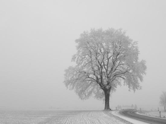 МЧС предупреждает кузбассовцев об ухудшении видимости на дорогах из-за снегопада