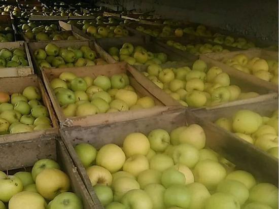 Овощи и фрукты начали дорожать в Свердловской области