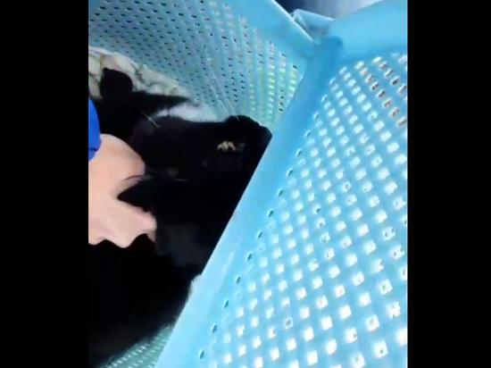 В Ногинске спасли застрявшую в разрушенном взрывом газа доме кошку