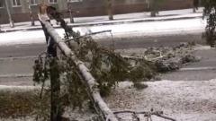 В Кемерове дерево во время падения выбило окно