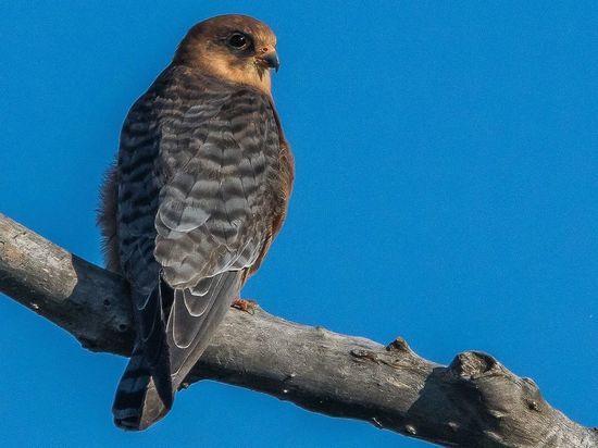 Редкую птицу впервые зафиксировала фотоловушка в красногорском заповеднике Лохин остров