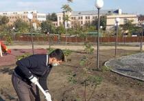 В эти выходные в сквере Судоверфи имени Кирова в посёлке Казачий в Ленинском районе за один раз появилось 25 деревьев