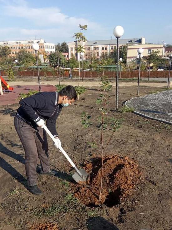 В Астрахани в обновленном сквере в посёлке Казачий высадили деревья
