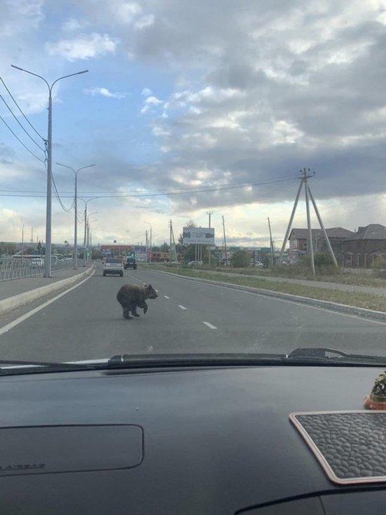 Минприроды Тувы предупредило жителей об активизации медведей