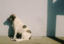 Прокуроры заставят чиновников поймать бродячих собак и построить приют в Шурышкарском районе