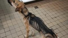 В Тутаеве спасли собаку сбежавшую из концлагеря