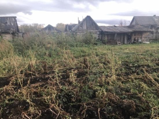 В Красноярском крае женщина убила своего сожителя и закопала его в саду