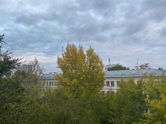 Суд обязал мэрию Оренбурга вернуть деревья