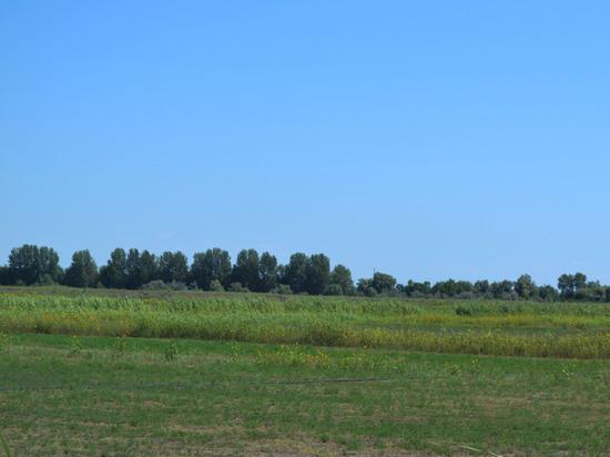 В Астрахани специалисты Россельхознадзора могут привлечь к административной ответственности владельцев земельных участков