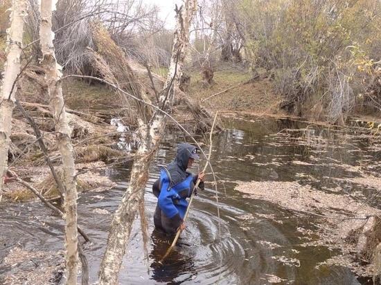 В Эрзинском районе Тувы с 21 сентября ищут пропавшего в лесу мужчину