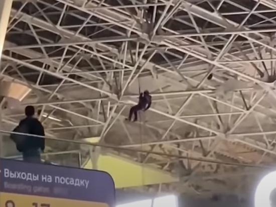 «Человек-паук», бродивший по потолку аэропорта «Внуково», сломал лодыжку