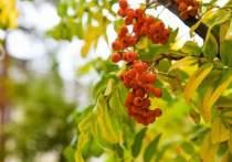 Дождей в пятницу и выходные в Волгоградской области не ожидается