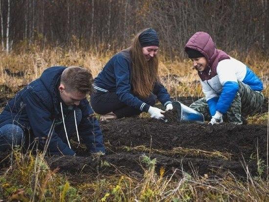 20 000 кедров высадят под Томском волонтеры