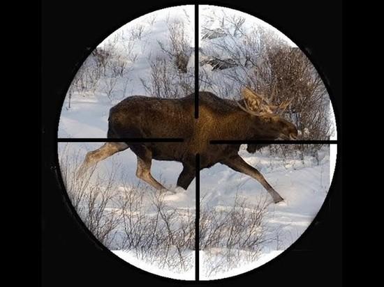 В Ярославской области начался сезон охоты на лосей